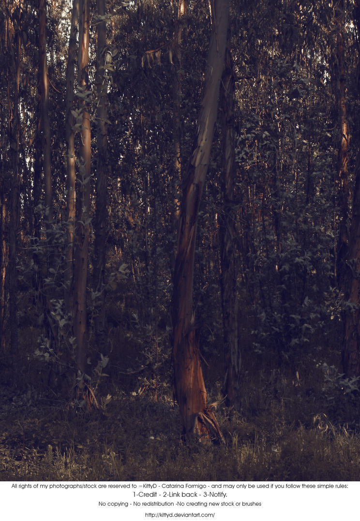 Fairy Forest by KittyD