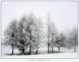 Iced Paradise by Secular