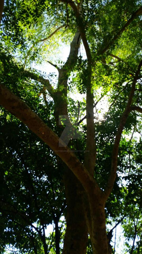 Tree's on a Sunny Sumer day~ by caiteecandy