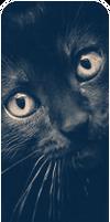 F2U Cat banner 2