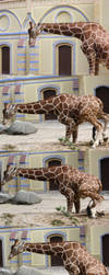 Giraffe Flip-Book by ScHoKoKeKsChEn