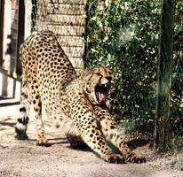 Another Big Yawn by ScHoKoKeKsChEn