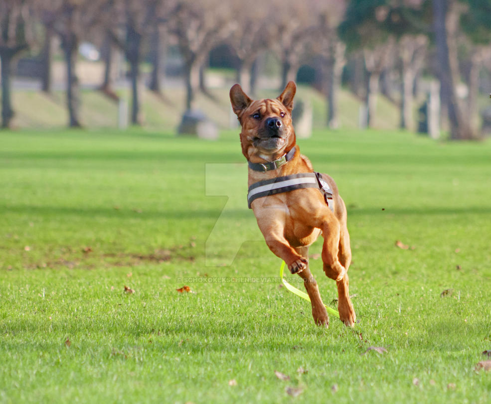 Flying Dog by ScHoKoKeKsChEn