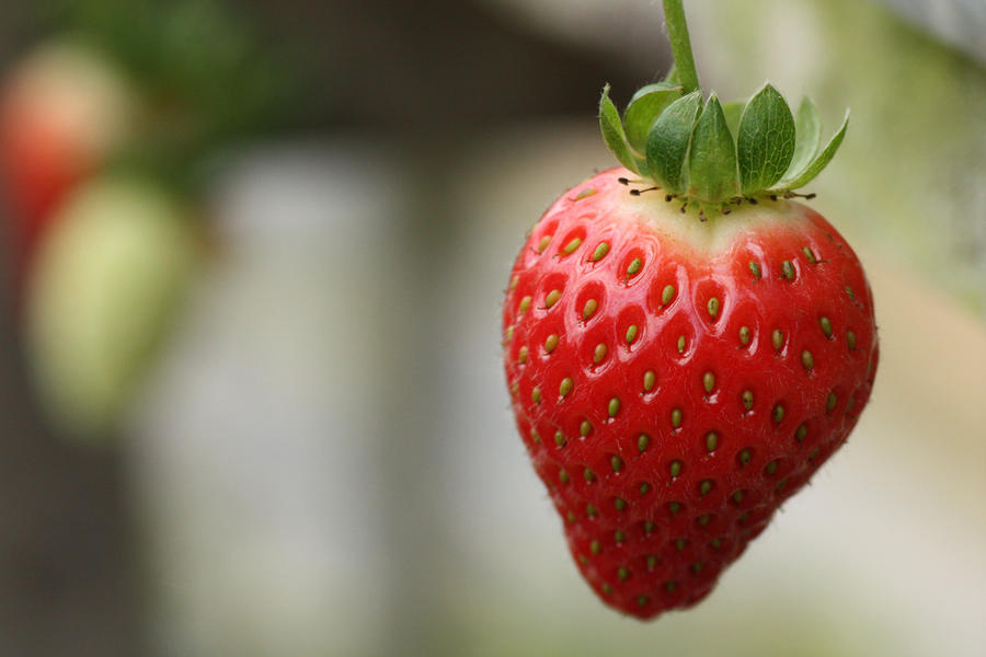 Strawberry by Khaled-vision