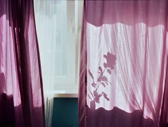 Window. by goldrubbish