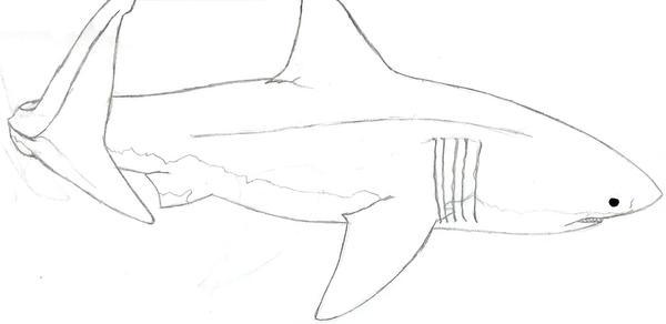 Great white shark by AkatsukiWizard