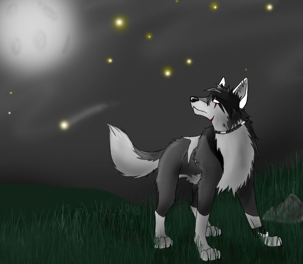 Mondwolf - Wenn der Mond den Himmel verlässt When_I__m_blind___by_AnimeWolf94