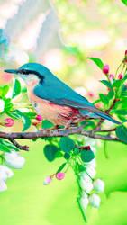 Bird by Shalshelan