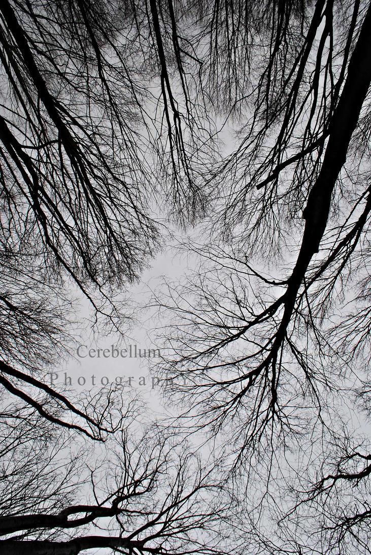 010 by Cerebellum13