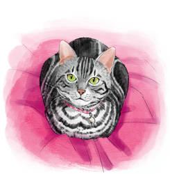 cat 51