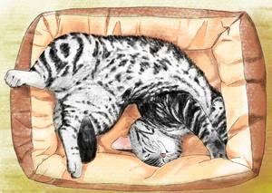 cat 52