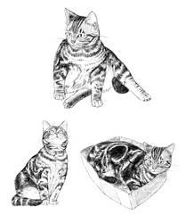 cat 55
