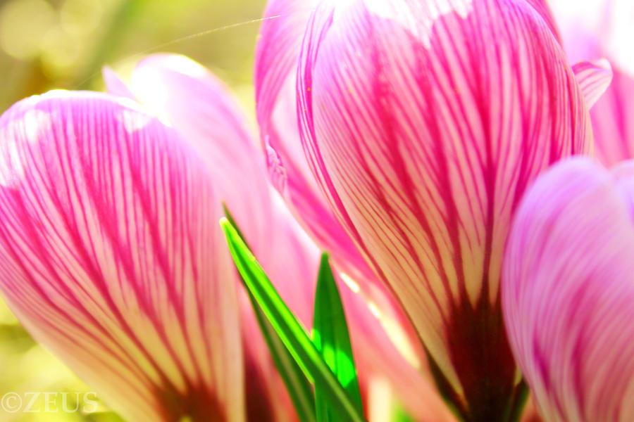http://fc00.deviantart.net/fs71/i/2012/078/f/e/hot_air_balloons__by_zeus1001-d4ta7fm.jpg