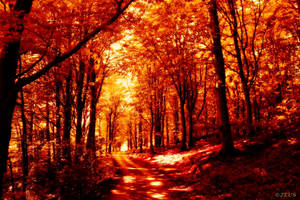 Forever Autumn. by ZEUS1001