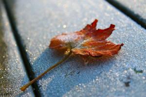 Frozen In Time. by ZEUS1001