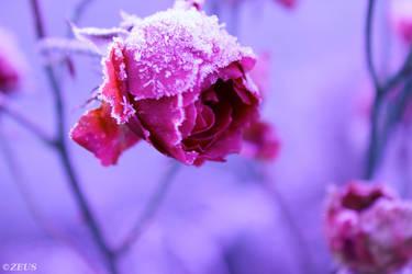 Frozen Heart. by ZEUS1001