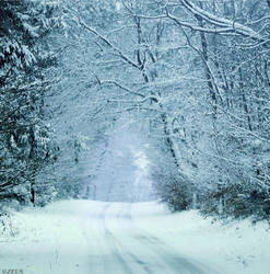 Walking In A Winter WonderLand. by ZEUS1001