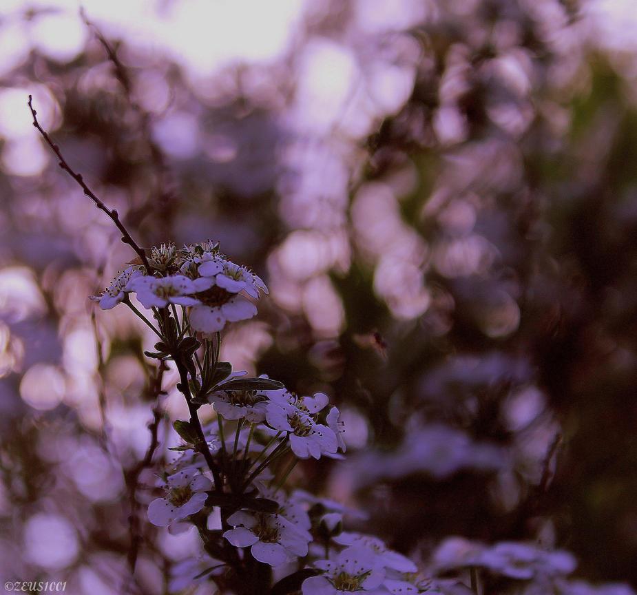 Summer Days. by ZEUS1001