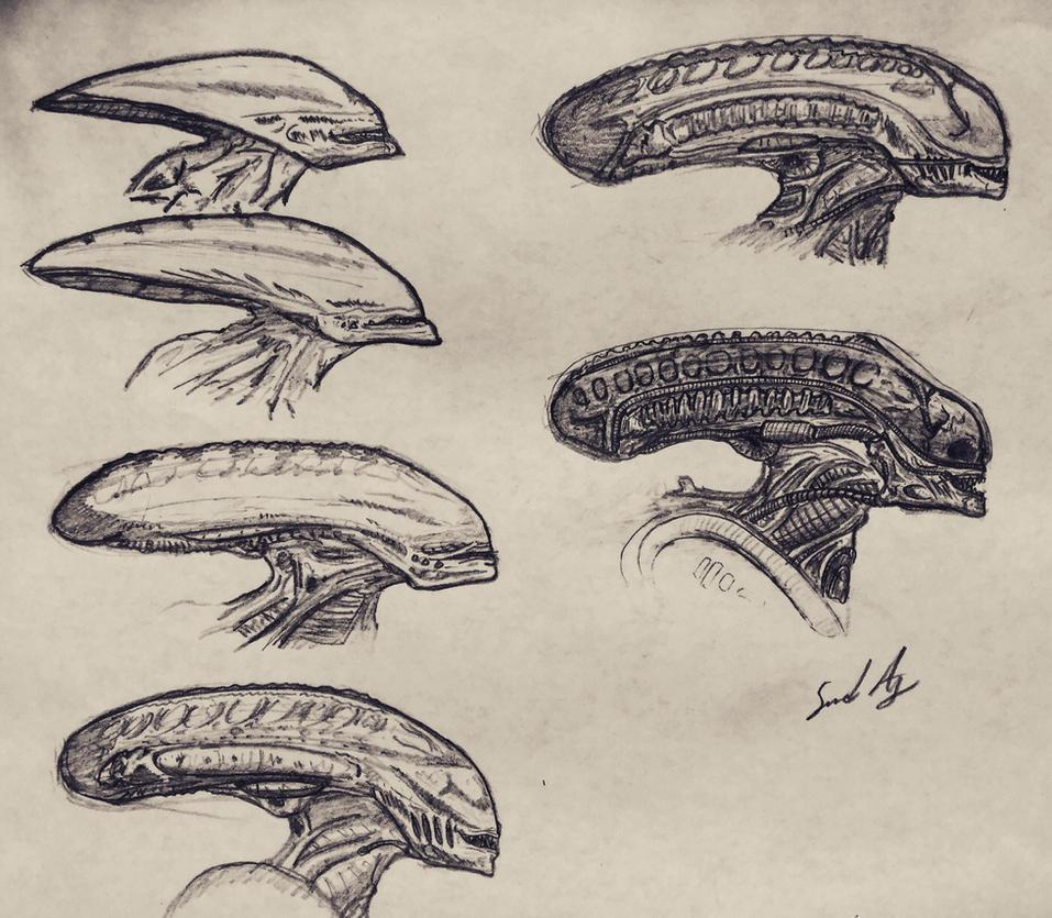Xenomorph evolution by Progr22 on DeviantArt