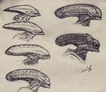 Xenomorph evolution