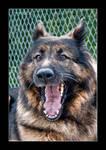 Elvis The Dog Hdr by OrisTheDog