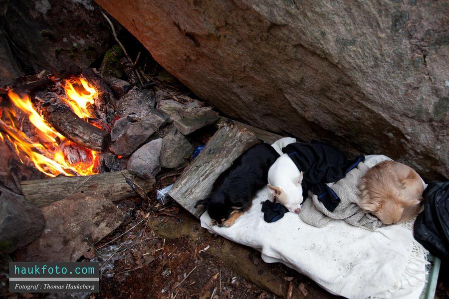 Dogs Sleeping Beside Fireplace