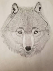 First Attempt At Realism by LostSoulPup