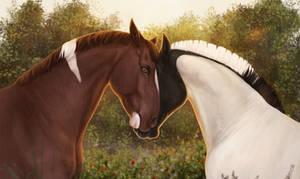 A sunny couple of horses
