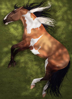 Horse in the rays