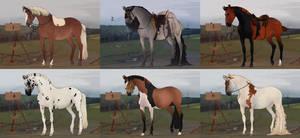 Horse adopt auction 1 [CLOSED]