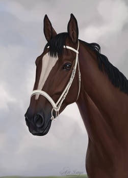 Com: racehorse from SolarHorse
