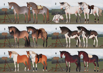 Auction horse adopt 74  [CLOSED]