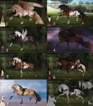 Auction horse adopt 81 [CLOSED]