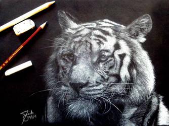 White Tiger by SAibIRfan