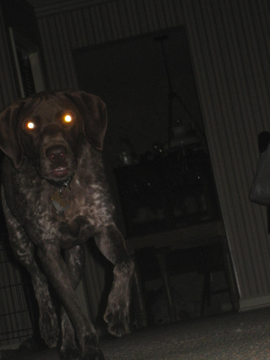 Evil looking dogs