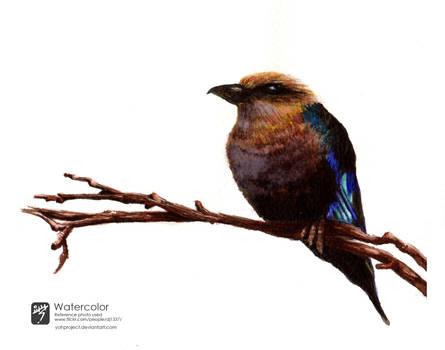 Watercolor Bird I