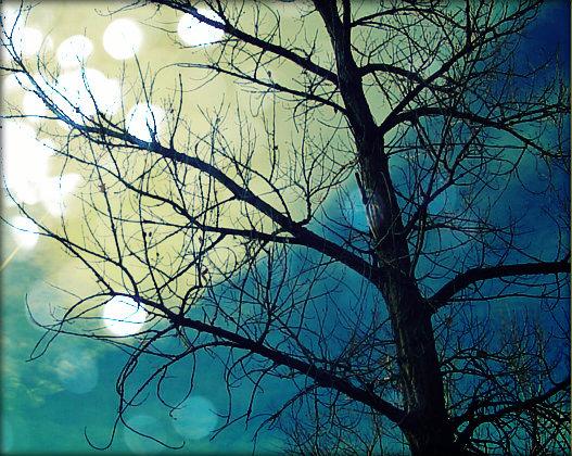 Twilight by Chessta