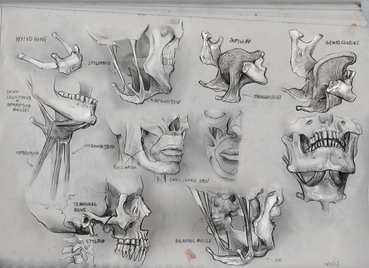 Anatomy Head Neck1 by mattdonnici on DeviantArt