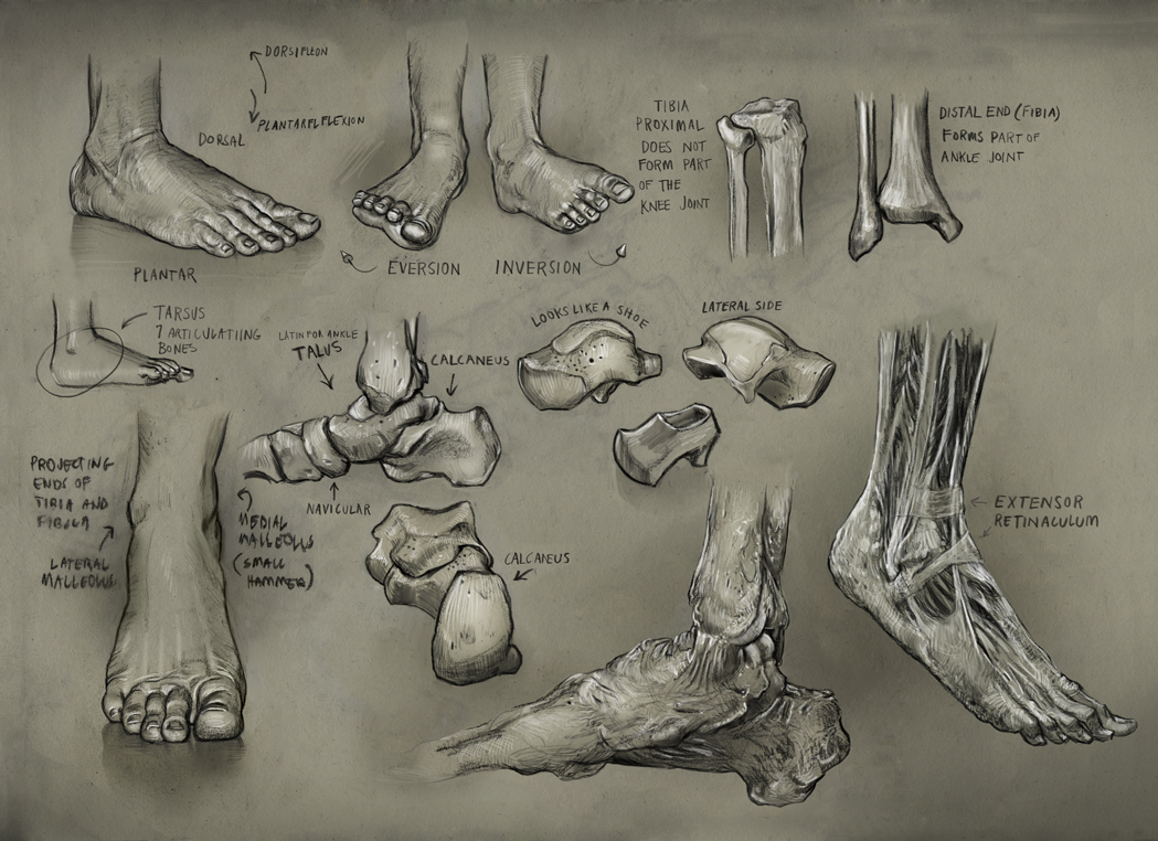 Foot1 by mattdonnici on DeviantArt