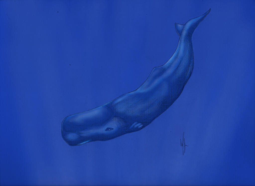 contract sperm whales Whaling in norway involves fin whales and blue pedersen had previously worked with the russians and was employed with a lucrative three-year contract.