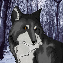 Wolf in Forrest by Nicki95