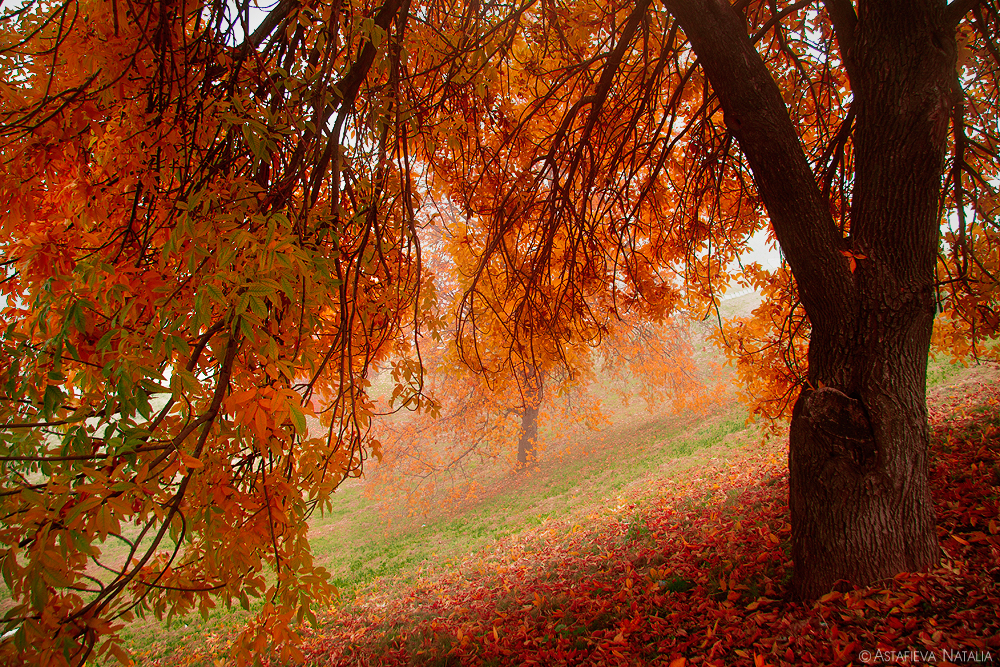 golden autumn [35] by NatalieAster