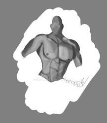 Anatomy torse study