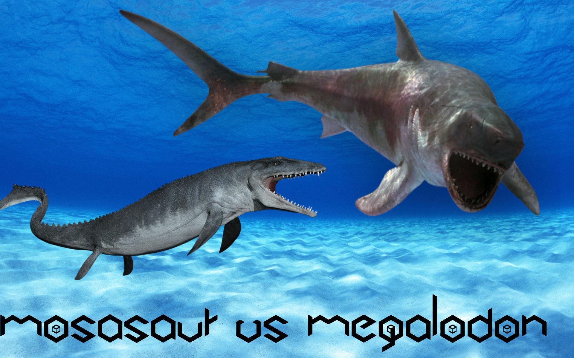 Megalodon Vs Killer Whale | www.imgkid.com - The Image Kid ...
