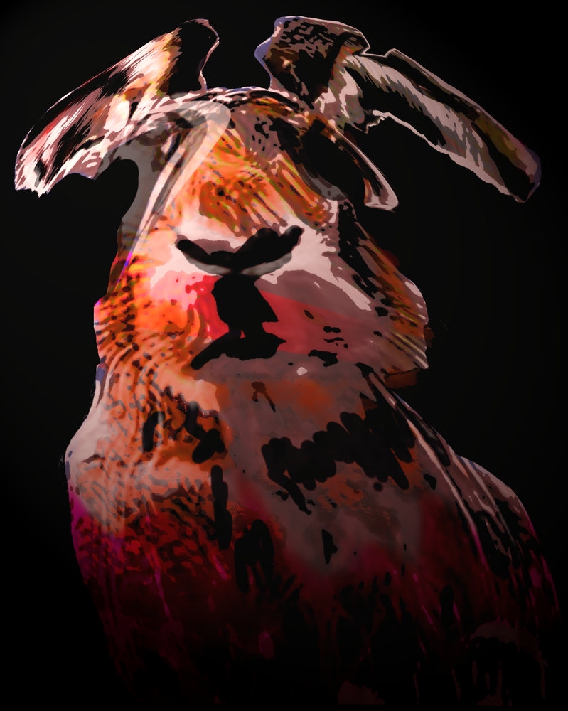 Boof 2014 by ArtOrca