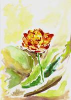 Tulip - watercolor 2 by snow-jemima