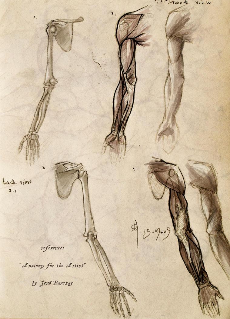 Anatomy practise 01 by snow-jemima on DeviantArt