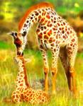 Fractial giraffe and baby