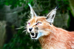 Fractal Caracal Cat by debby-saurus