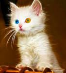 Fractal kitty 3